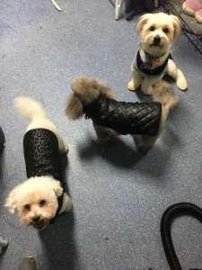Charlie, Harriett & Oscar in their evening wear.