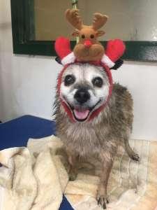 Christmas Kalua!!